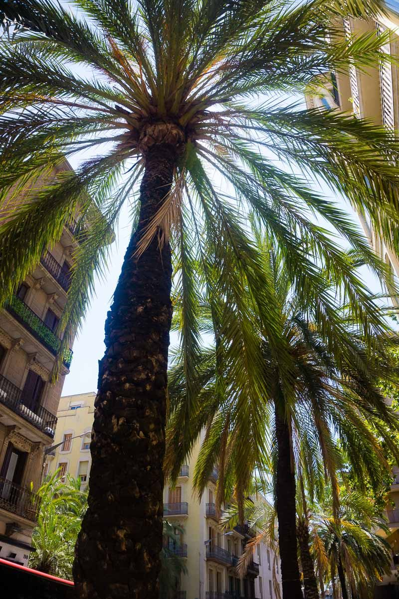 Barcelona has everything-- trees, beaches, city, mountains.